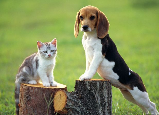 Отношения с другими животными