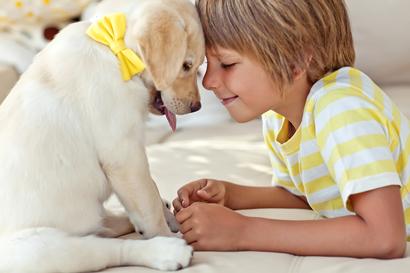 Лучшие породы собак для детей с фотографиями и описанием
