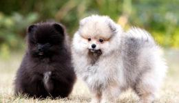 Породы маленьких собак, подходящих для содержания в квартире