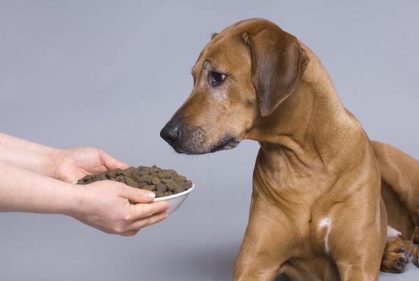 Плюсы и минусы сухих кормов для собак
