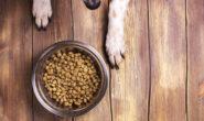Сухой корм для собак крупных пород. Описание и классификация